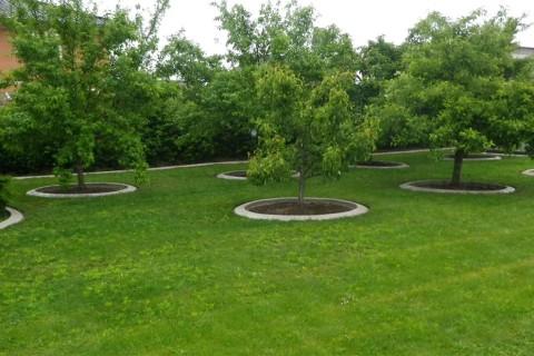 Beete und Bäume